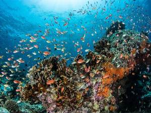 An abundance of fish swimming around the coral reef