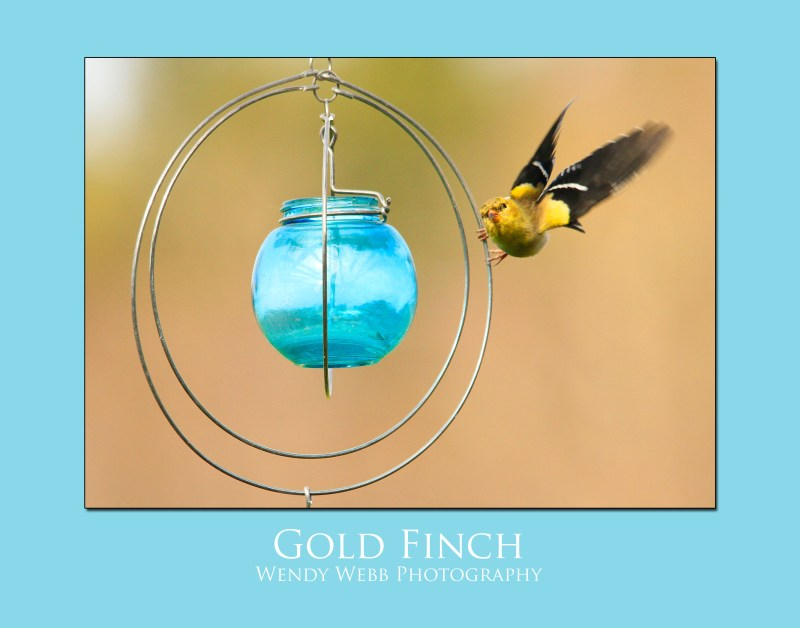 Gold Finch on windchime