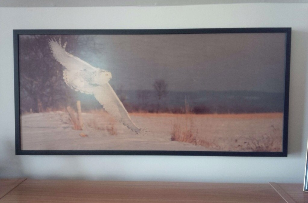 Snowy Owl 40×21 printed on wood