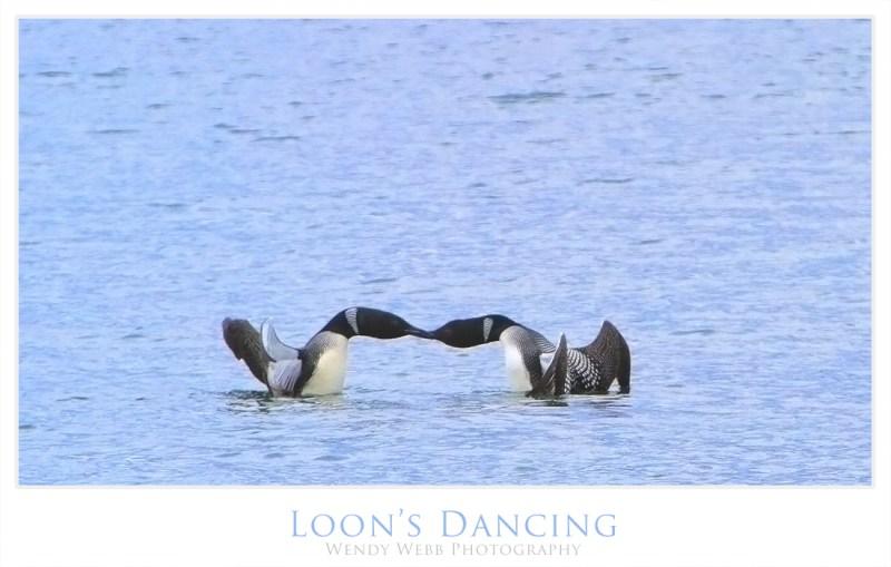 looons dancing