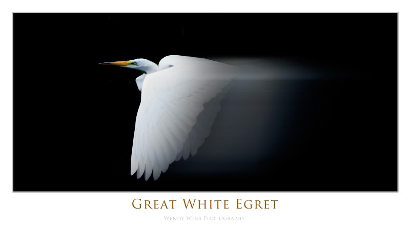 great white egret blurred