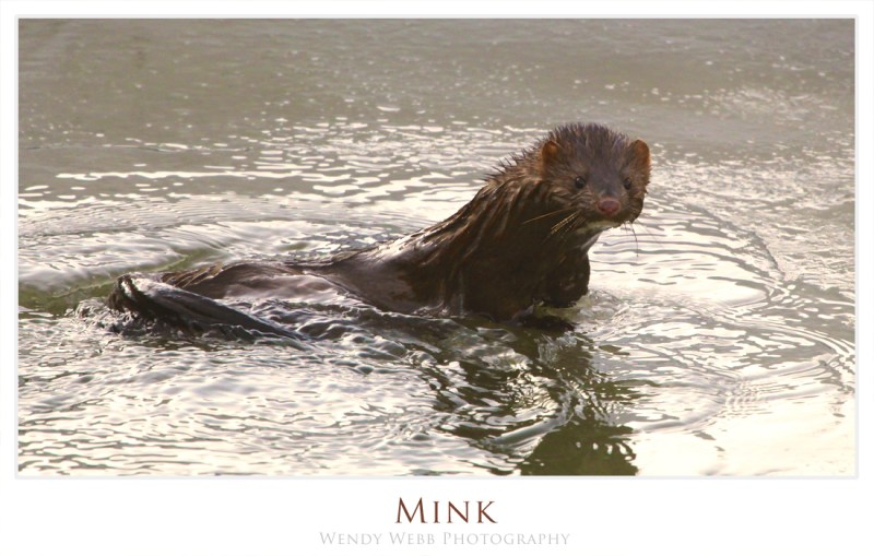 Mink, how about a swimming shot?