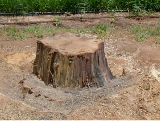 tree-stmp