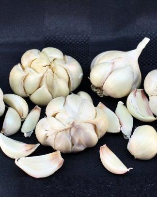Ail Garlic - Silver Rose - SILVERSKIN