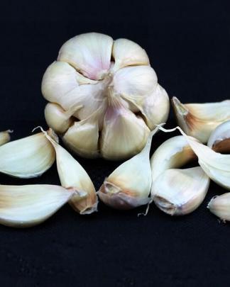 Ail Garlic - Silver White - Bulbe Tressable Braidable
