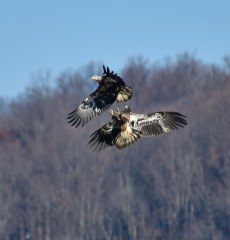 2-Young-Eagles