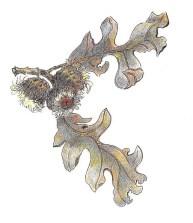 burr-oak-copyright-linn-eldred