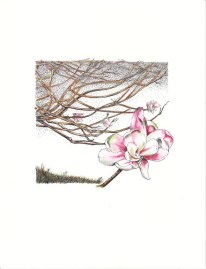 Magnolia Ink & Colored Ink Wash, copyright Nancy Thyfault