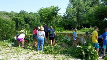 """""""Good"""" plant or """"Bad"""" plant? : Plant ID/Invasive Species Removal at Nature At the Confluence @ Nature At The Confluence"""