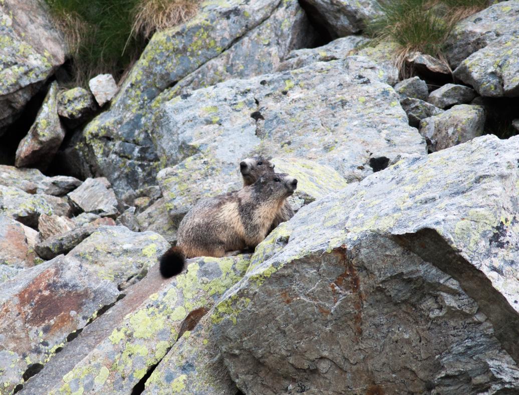 Circuit de Fenestre - Marmottes