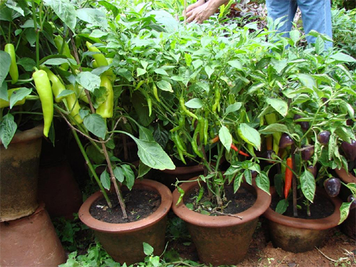 kitchen-garden-copy