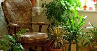 7indoor plants that greenery around you |Decorate dark corners