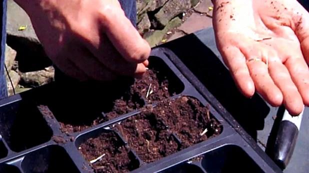 seedling-3