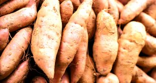 How to Grow Sweet Potatoes in your Garden | Nature Bring