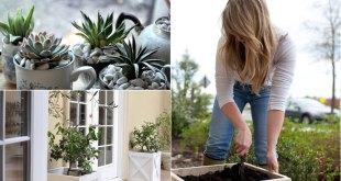 11 DIY Planters can enhance your garden beauty