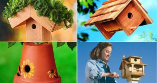 10 DIY Birdhouse a Charming Project | Nature Bring