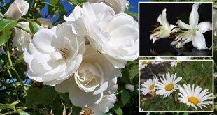 White flowers | create a peaceful landscape