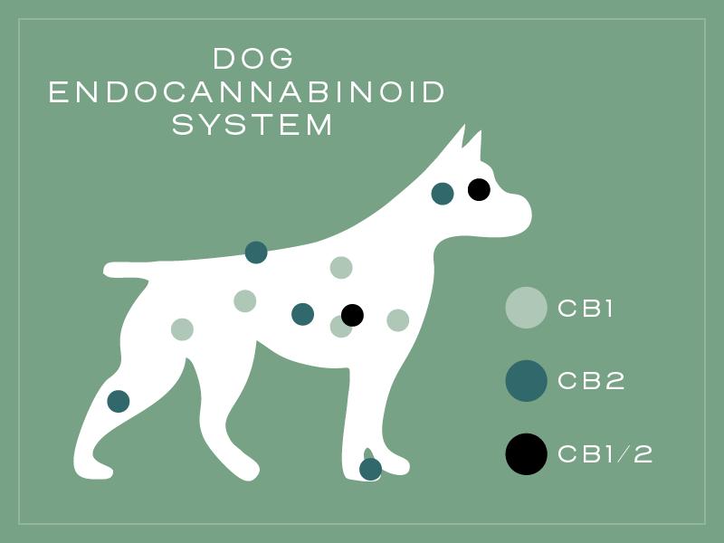 dog encannabinoid system