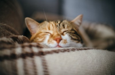 cbd for cats is it safe