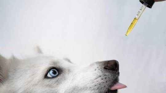is cbd safe for pets