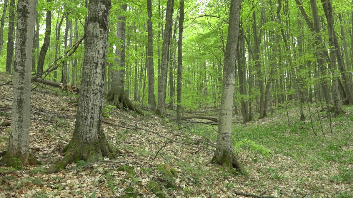thinking like an investor diversified forests hedge against an thinking like an investor diversified forests hedge against an uncertain future nature change