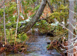 Riverine Wetland