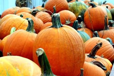 Pumpkins in Cart