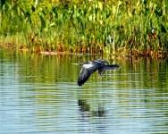 Flying over Lake Tsala Apopka in Florida.