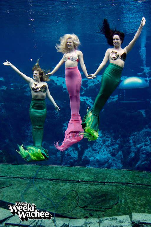 Being a Weeki Wachee mermaid is a special thing. With nearly 70 years of history, grace and cameraderie, the mermaids of Weeki Wachee State Park are always making park visitors smile.
