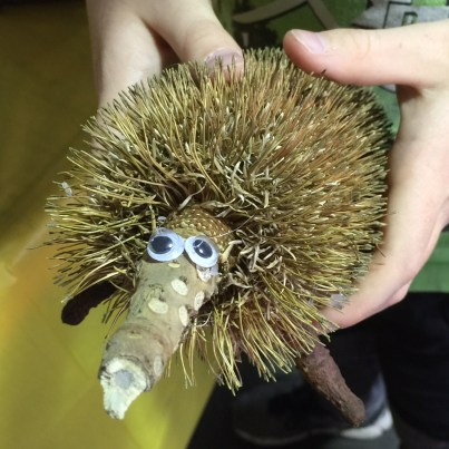 nature crafts for kids-echidna-banksia-nature crafts