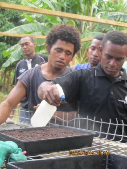 Nabukelevu youths master the art of sandalwood propagation and contour farming