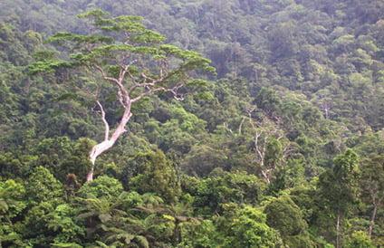 Native forests contain the vast majority of Fiji's endemic biodiversity (Photo: J.Kretzschmar)