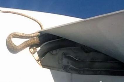 Hitchhiker caught on a Qantas flight