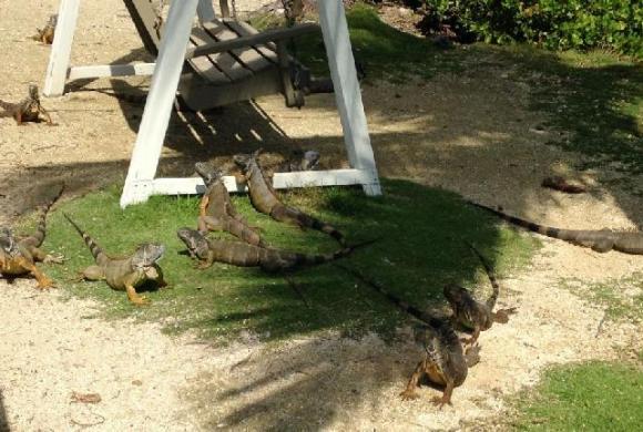Children's park in Georgetown, Grand Cayman