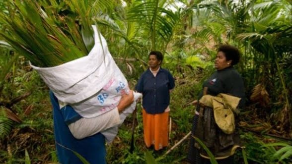 Replanting Fiji's Endemic Sago Palmwith Nunia