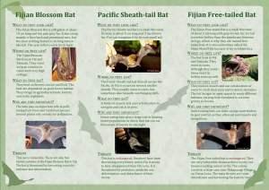 Fiji′s cave dwelling bats.