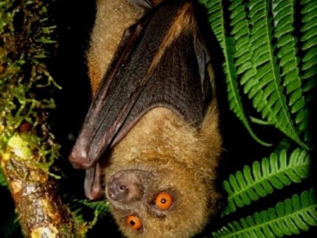 1st Pacific Islands Bat Forum: 10 – 14 August 2021