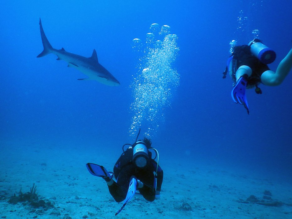 divers and a shark