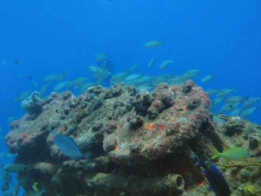 tiegland cable reef