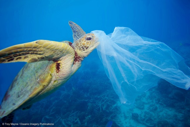 sea turtle eating plastic