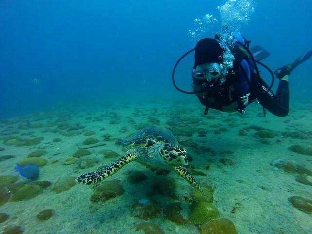 diver sea turtle