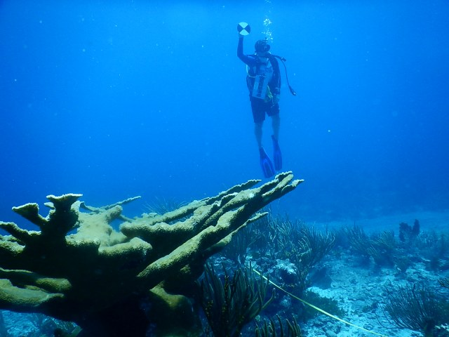GCRMN diver