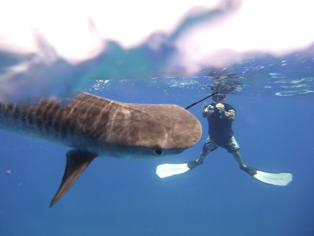 shark caught on a line