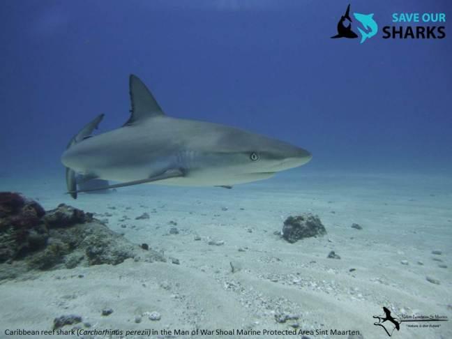 Shark poster shark week 2019