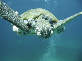 TurtleFibro2