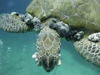 TurtleFibro3