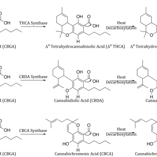 Canna-Biosynth-Blog-Fig-2