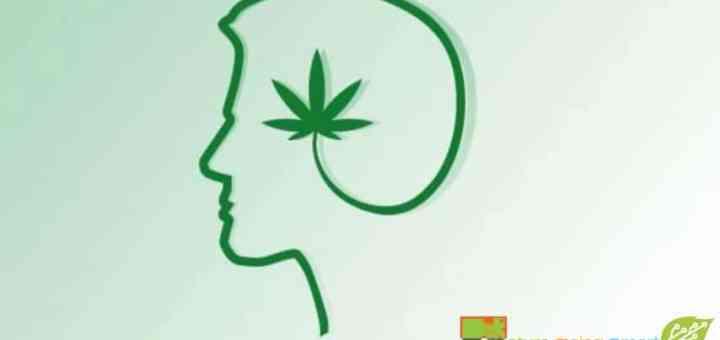 alzheimer's disease cannabis-Alzheimer's-Disease-&-Cannabis