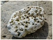 Cobble-size beach stone with holes made by sea creatures