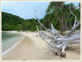 Coral beach with driftwood on Normanby Island
